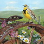 Hargreaves-Julia-Meadow-Lark_90