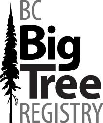 big tree-logo-212